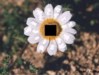 20040064.jpg